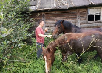 Horses in the rural Russia