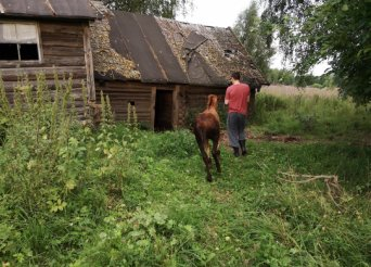 Horses living in the abandoned house, Russia