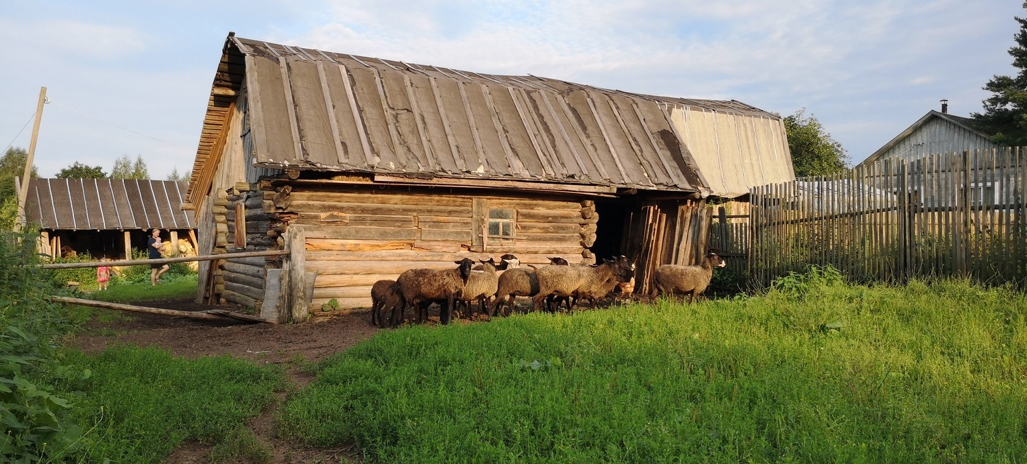 Livestock in the rural Russia